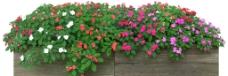 花卉源文件图片
