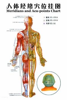 人体经络穴位挂图图片