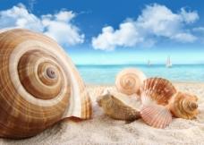 海边海螺图片