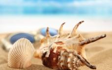 唯美海边海螺图片