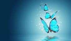 蓝蝴蝶图片
