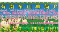 海南东山羊图片