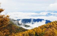 云雾植物图片