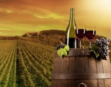 葡萄酒 庄园图片