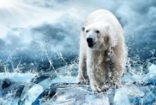 秦皇岛野生动物园北极图片