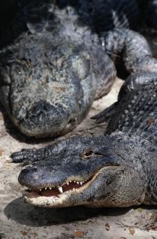 凶猛动物图片