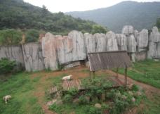 动物园风景图片