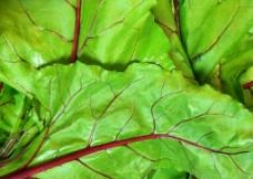 蔬菜叶图片