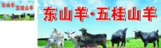东山羊图片