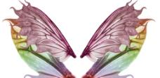 彩色翅膀图片