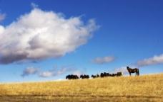 草原之主图片