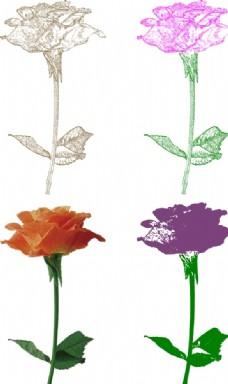 矢量玫瑰圖片
