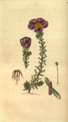 植物花圖片