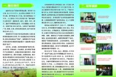 黄牛养殖宣传三折页图片