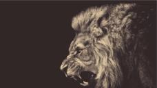 凶猛狮子图片