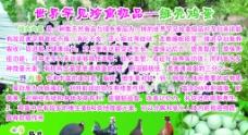 绿壳蛋鸡图片