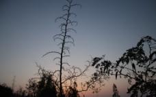 黄昏树影图片