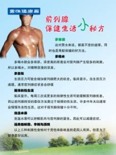 男性健康展板