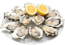 牡蛎素材图片