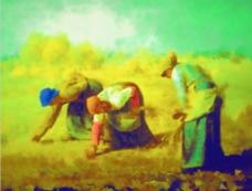 收稻谷油画