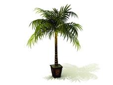 室内植物3d模型