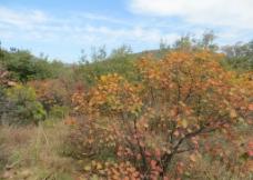 太室山秋季景色图片