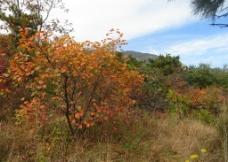 太室山秋季风光图片
