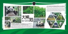 大熊猫展板海报
