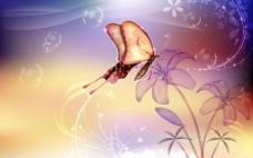 蝴蝶花朵素材