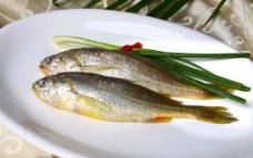 小黄鱼图片