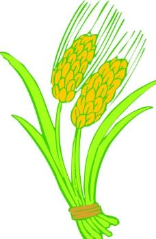 稻谷 麥穗圖片