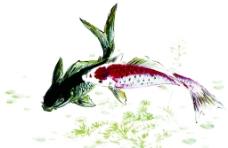 水墨鱼图片