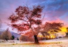 野外大树图片