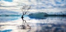 湖中央树木图片