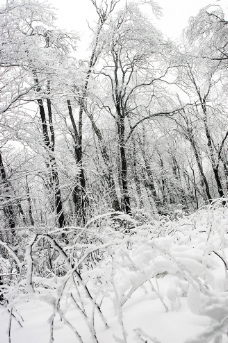 冬天树林图片