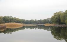 秋日芦苇图片