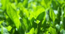 绿色满园图片