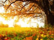 暖秋背景图片