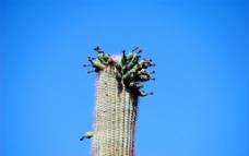 沙漠之花图片