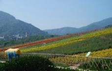 茶溪谷图片