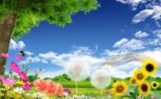 蓝天大树风景图片