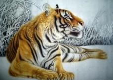 老虎能上树吗