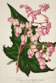 花类图鉴 植物图片