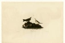 鸟类图鉴 手绘图片