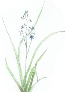 花类图鉴 植物 花图片
