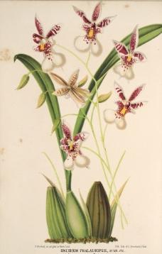 花类图鉴 植物手绘图片