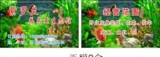 紫罗兰花鸟鱼生态馆图片