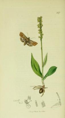 植物手绘图片