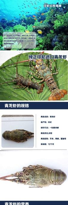 青龙虾详情页