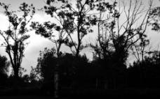 黑白艺术照图片